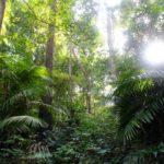 ForestCambodia